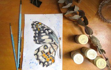 borboleta-ilustracao